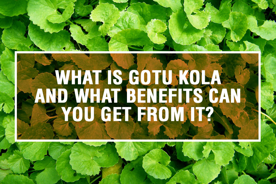 What is Gotu Kola and What Benefits Can You Get From It?
